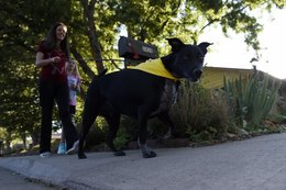 How dogs are leading the charge against local crime in Wheat Ridge