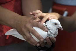 Pigeons keep quirky Poudre river rafting tradition afloat